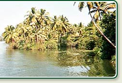Canal in Alleppey