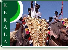 Elephants are revered in Kerala during special festivals like famous Pooram Festival